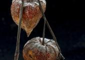 freek-den-dulk-lantaarnplantje-007-f98edb432b465236721b20b6cbc8283fb2e9f807