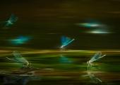vluchtig-licht-a0f9aed5497436bd883b40464569c137559ef4cd