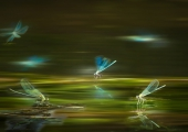 pauli-gerritsen-01-ballet-dragonfly-ca31ee372854028c15850b2f5c5b42bb84b9da5f