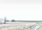 5rob-renshoff-winters-polderlandschap-5-09115915abcfe222cae9f3331078bf864720cd8c
